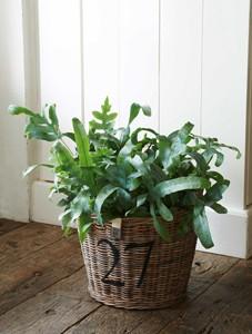 Rustic Rattan Planter M
