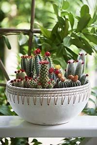 Serene Island Terracotta Pot L