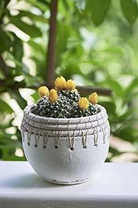 Serene Island Terracotta Pot S